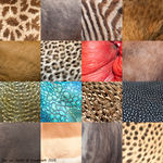 Title: Color patterns of kruger