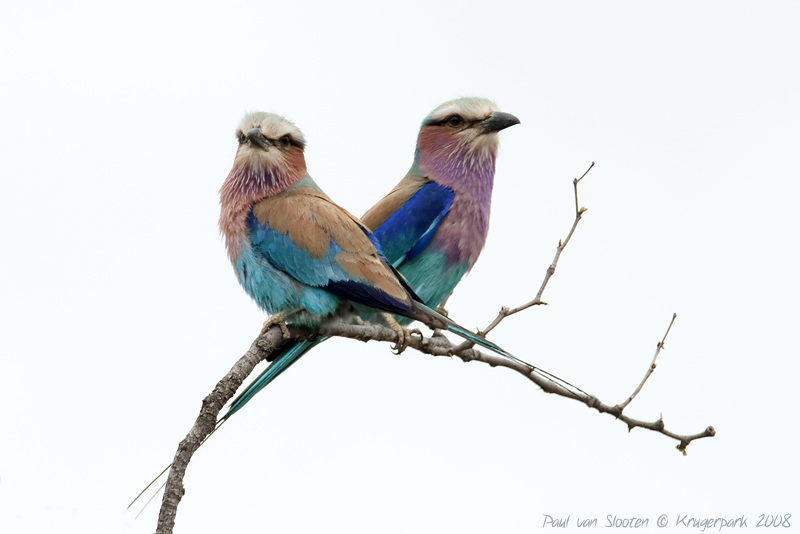 A colorfull couple