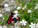 Title: Red Butterfly