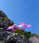 Title: Flowers on the rock