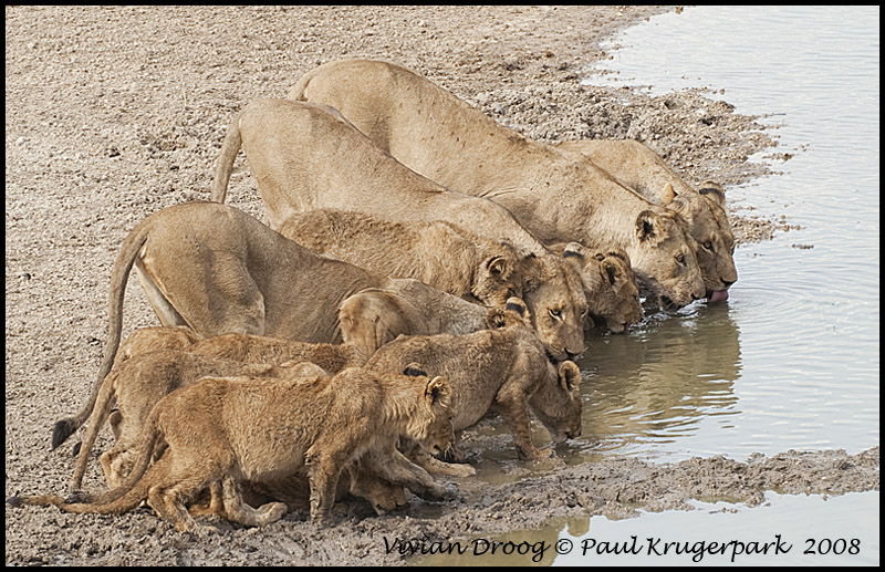 Thirsty family