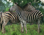 Title: Together forever