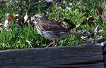 Title: Another Type of Sparrow