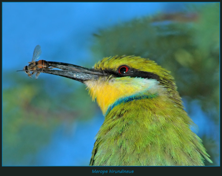 Birds 3 � Insects Nil