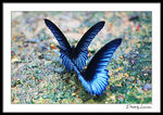 Title: Together Rhythm - Butterfly