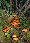 Title: mushroom in the forest