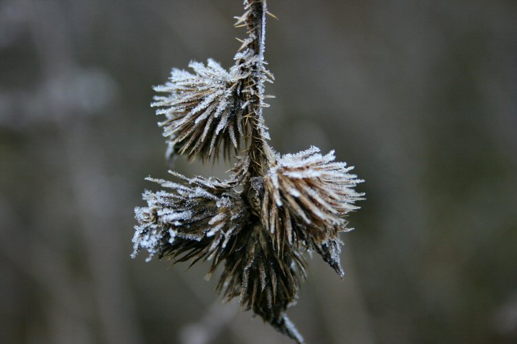 The frosty morning II