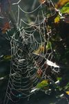 Title: Spider's web