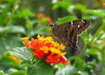 Title: Another butterfly