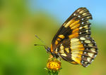 Title: Butterfly in the country