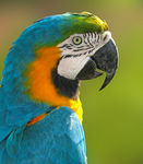 Title: The macaw