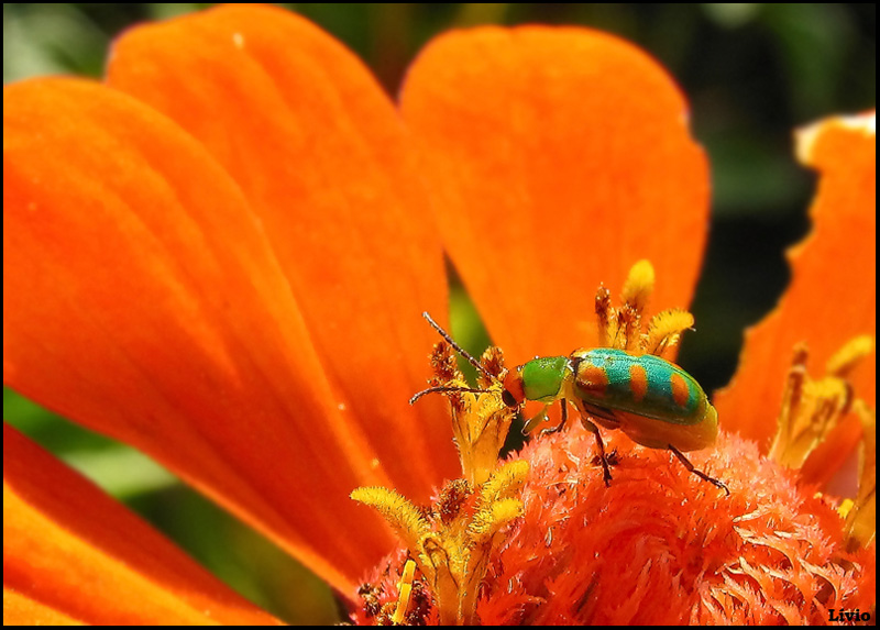 Another tiny insect