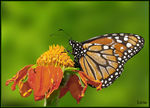 Title: Another great monarch
