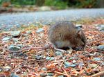Title: Sleeping Mouse