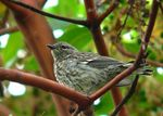 Title: Yellow Rumped Warbler