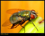Title: A Fly's Colors