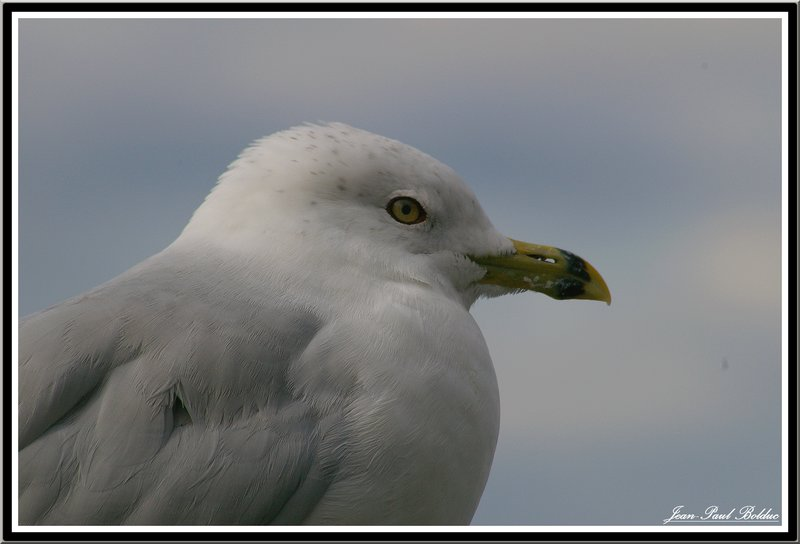 The sea-gull on the watch