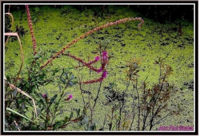The nice plants in the marsh