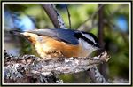 Title: The nuthatch with the remote lookKodak DX6490
