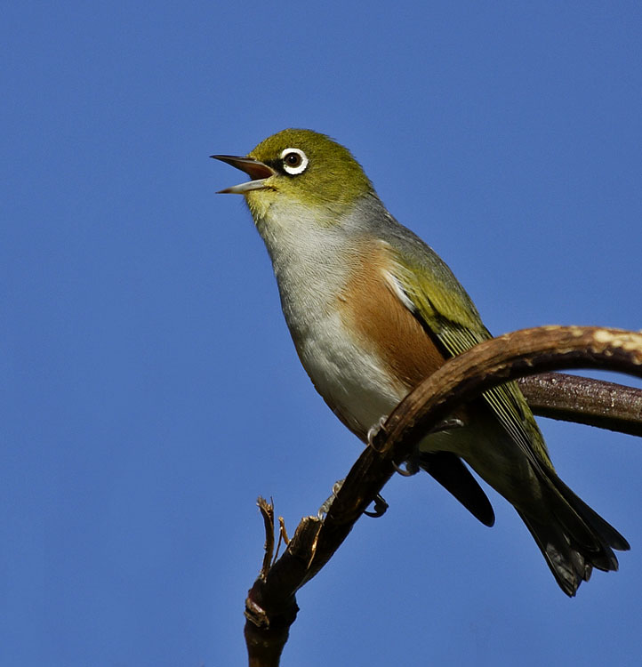notes on birdsong Birdsong in frost's poetry, birds represent nature, and their songs represent nature's attitudes toward humanity birds provide a voice for the natural world to communicate with humans birds provide a voice for the natural world to communicate with humans.