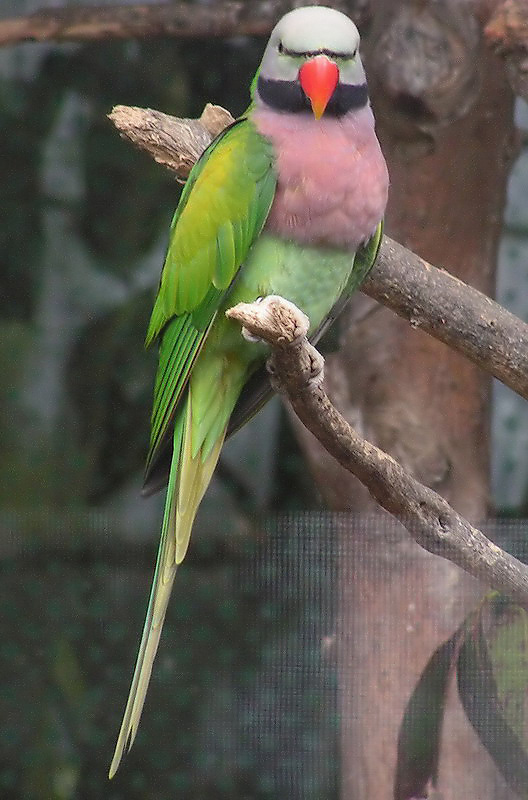 Well understand asian ring necked parrott think, what
