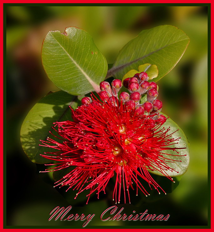 Best Wishes For The Festive Season