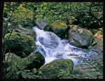 Title: Moss and Water #2 Camera: Konica Minolta Dimage Z2