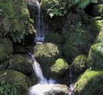 Title: More Wairere Falls Walk