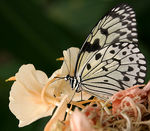 Title: WhiteTree Nymph Camera: Canon EOS 10D