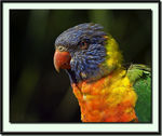 Title: Rainbow Lorikeet Camera: Canon EOS 20D