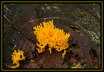 Title: Yellow Calocera viscosaPentax *ist DS