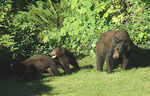 Title: Bears At Cultus Lake