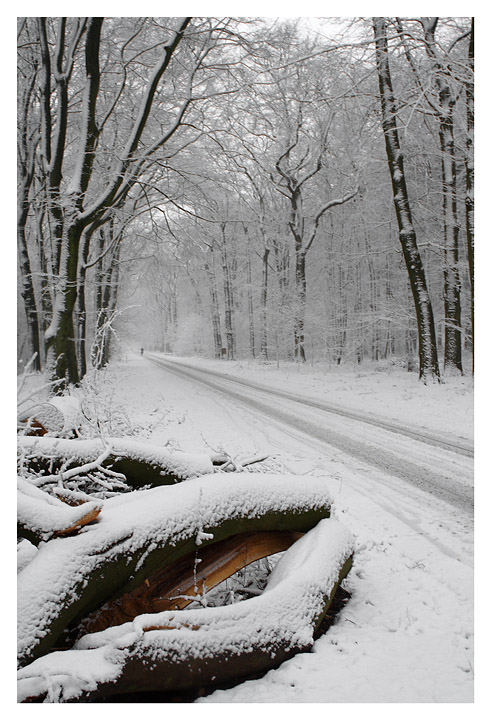 Winter In the Netherlands