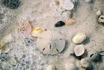 Title: Shells at St. Andrews State ParkNikon N80