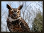 Title: Wise as an owl?Nikon        D70s