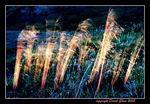 Title: Grass in the wind