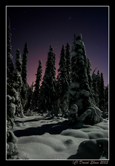 Boreal forest at night
