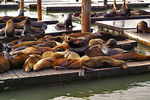 Title: Coupled Sealions