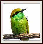 Title: Bee Eater on Wire