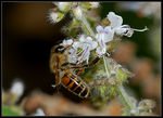 Title: Busy Bee 3