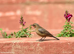 Title: Brown Rock Chat