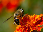 Title: Busy Bee