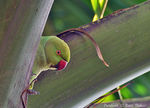Title: Parakeet on Palm Tree