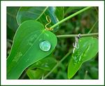 Title: Pearl on A Leaf