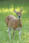 Title: young doe 2