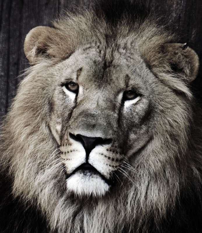portrait of the king