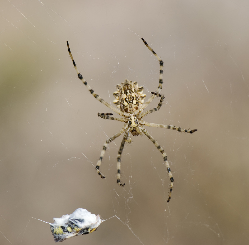 the spider and its meal
