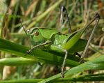 Title: The Young Grasshopper