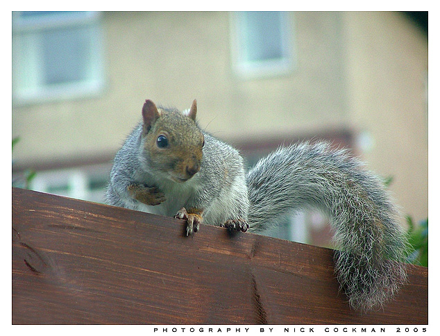 Naughty Squirell