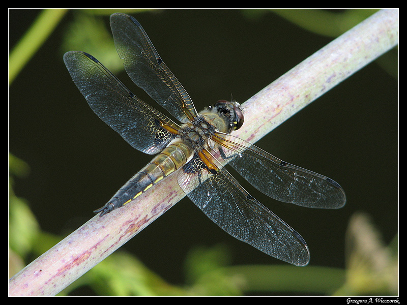 Be My Meal!
